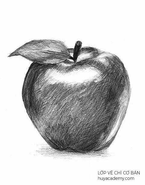 Lớp học vẽ cơ bản tại đà nẵng (3)